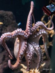 2009 Aquarium Barcelona_11