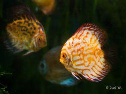 2009 Aquarium Barcelona_18