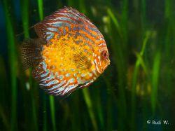 2009 Aquarium Barcelona_19