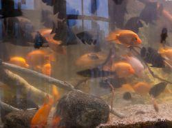 2009 Aquarium Barcelona_29