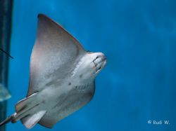 2009 Aquarium Barcelona_4